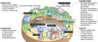 Le cycle urbain de l'eau. DCO : demande chimique en oxygène. Source : d'après Eau du grand Lyon