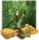 La biomasse, une large palette de matières premières renouvelables.