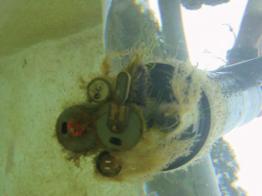 Des biosalissures s'installent sur un capteur océanographique.