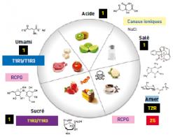 Récapitulatif des saveurs et détecteurs associés aux types d'aliments.