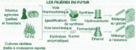Fabrication de biocarburants (d'après D. Ballerini, Institut Français du Pétrole)