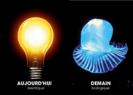 Le biomimétisme : remplacer l'ampoule électrique par de la lumière d'origine biologique ?