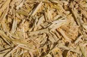 Sugar cane bagasse