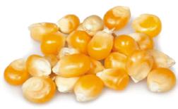 La zéine, protéine issue du maïs, crée un film naturel qui protège la peau.