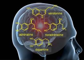 L'effet de l'activité physique sur le moral est dû à l'action de multiples neuromédiateurs cérébraux, molécules de la famille des monoamines.