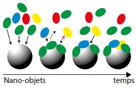 Représentation de l'effet corona : les (macro)molécules dans les milieux biologiques et dans l'environnement s'adsorbent sur les nano-objets.