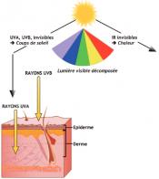 Les rayonnements du soleil et ses effets sur la peau
